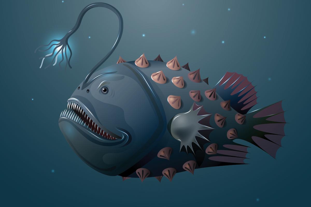 anglefish.png